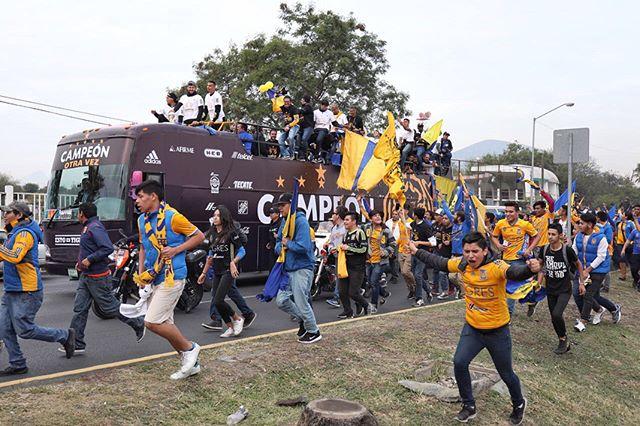 Tigres campeon